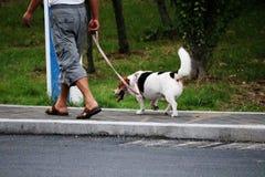 En morgon för hund` s går med hans ägare Arkivfoto