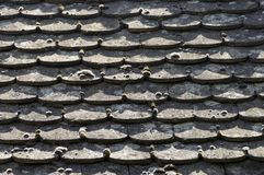 En mossa på det gamla taket Arkivbild