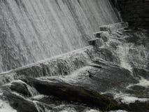 En mycket liten fågel i en vattenfall royaltyfri fotografi