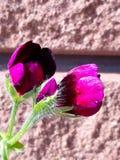 En mycket liten ljus purpurfärgad blomma i blomning arkivbild