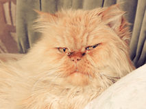 En mycket missnöjd katt! Arkivbilder