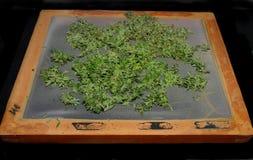 En mycket trevlig hemlagad mycket fin straing skärm 40 för marijuanaskaka arkivbild