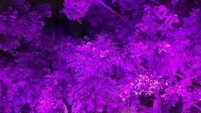 En mycket violett bristning arkivfoto