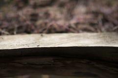 En myra Fotografering för Bildbyråer