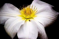 En myra på en blomma arkivfoto