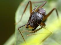 En myra på en växt på hög förstoring Royaltyfria Foton