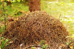 En myrstack Arkivbilder