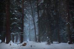 Magisk skogbana Fotografering för Bildbyråer