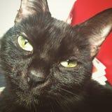 En mystisk svart katt med gröna ögon Arkivbild