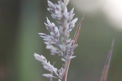En närbild av en växt i Maui, Hawaii fotografering för bildbyråer