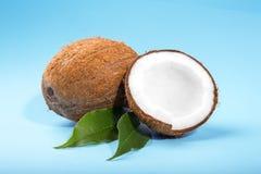 En närbild klippte kokosnötter på en ljus blå bakgrund Kokosnöt på nya sidor Härliga frukter för bantar Gourmet- livsstil Fotografering för Bildbyråer