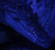 En närbild som skjutas av en krokodil arkivbilder