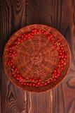 En närbildbild av en sund, smaklig och ljus röd vinbär i en upprätt position Färgrik röd vinbär mycket av vitaminer Royaltyfri Bild