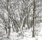 En nästan abstrakt blandning av täckte trädstammar och filialer med Royaltyfria Bilder