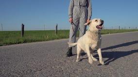 En nätt flicka leder en hund bredvid henne på vägen stock video