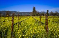 Napa Valley vingård Royaltyfri Fotografi