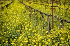 Napa Valley vingård Arkivbild