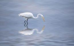 En Narcissus Crane Royaltyfri Bild