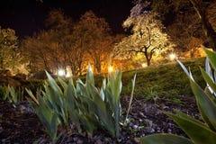 En natt i parkera Arkivfoton