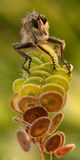 En nature Photo libre de droits