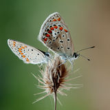 En nature photographie stock