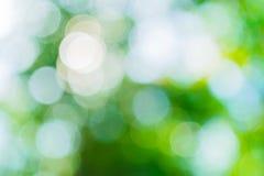 En naturlig grön suddighet av bladet Arkivbild
