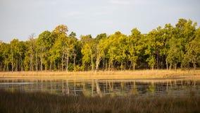 En naturlig scenisk landskapsikt av träd i skog royaltyfria foton