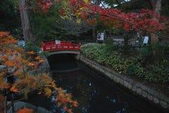 En nedgång i japanträdgård royaltyfria foton