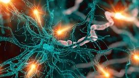 En nervcell vektor illustrationer