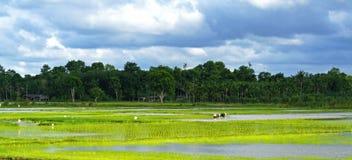 En nombre del arroz tailandés fotografía de archivo