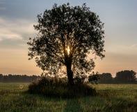 En ny dag gryningen av ett träd Fotografering för Bildbyråer
