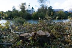 En ny stubbe, når att ha klippt ett träd nära en flod Royaltyfria Foton