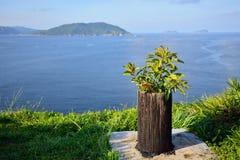 En ny växt på en stam och en fasadbeklädnad se Fotografering för Bildbyråer