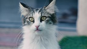 En nyfiken kattunge ser omkring lager videofilmer