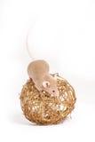 En nyfiken liten mus på den guld- dekorativa bollen Fotografering för Bildbyråer