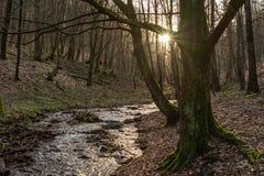 En obetydlig solkatt ser ut bakifrån detta träd royaltyfria bilder