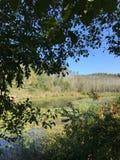 EN OCTUBRE DE 2018, el bosque de agua dulce en segundo lugar más grande del pantano de Turquía: Acarlar en Sakarya, Turquía imagen de archivo libre de regalías