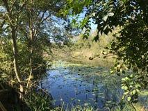 EN OCTUBRE DE 2018, el bosque de agua dulce en segundo lugar más grande del pantano de Turquía: Acarlar en Sakarya, Turquía foto de archivo libre de regalías