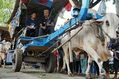 En octubre de 2017 El padre y el hijo asistieron 2017 al festival del carro del buey, Yogyakarta, Indonesia imagen de archivo