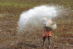 En oidentifierad jordbruksarbetare kastar gödningsmedlet i risfältfälten av Kuttanad royaltyfri bild