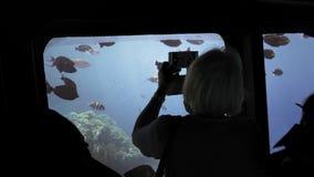 En oigenkännlig kontur av turister på ett undervattens- skepp är studera, beskåda och fotografera en flock av färgrikt lager videofilmer