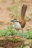 En okänd fågel Royaltyfri Foto