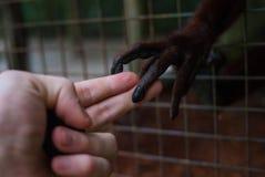 En olik handskakning Royaltyfri Fotografi