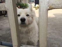En olycklig hund Arkivbild