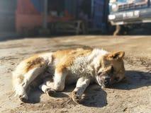En olycklig ledsen hund som vilar på jordningen royaltyfri fotografi