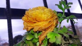En orange blomma Fotografering för Bildbyråer
