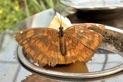En orange fjäril arkivbild