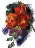 En orange fresia med vattenfärgbakgrund stock illustrationer