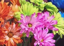 En ordning av den färgrika gerberaen Daisy Flowers Royaltyfri Fotografi