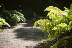 En ormbunkeväxt som växer på sidan av grusbanan, backlit med solljus arkivfoto